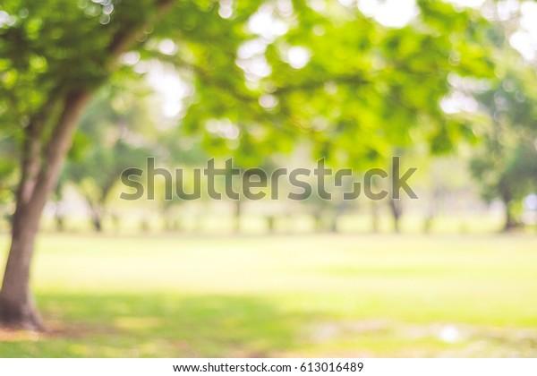 Blur park garden tree in nature background, blurry green bokeh light outdoor in summer background