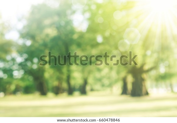 Blur park with sun light abstract background.