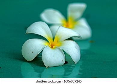 Blur of Plumeria flower on ceramic floor