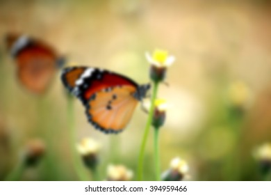 Blur short of butterfly on grass flower