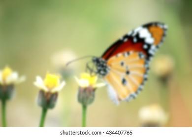 Blur shot of Butterfly on grass flower