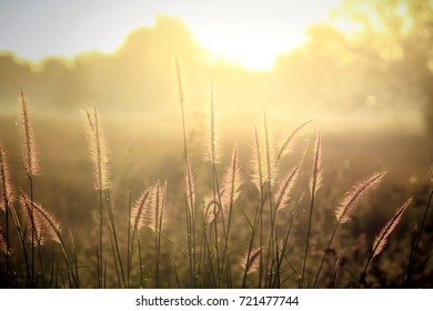 blur and soft  silhouette of grass flowers (poaceae) with soft golden light, grass flowers in natural with blurred background,abstrat background,thailand