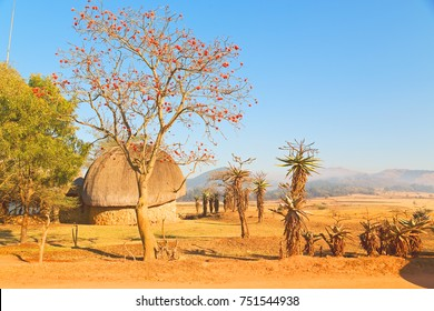 blur in swaziland   mlilwane wildlife   nature  reserve mountain and tree