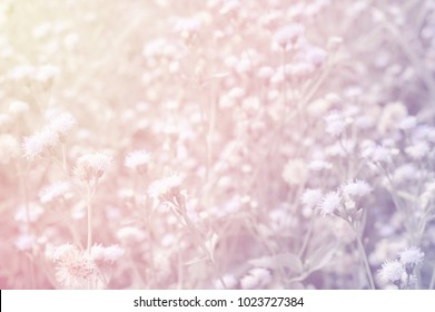 blur of winter grass flower with pastel color efect nature background
