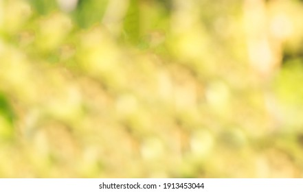 blur Yellow and green leaves  background