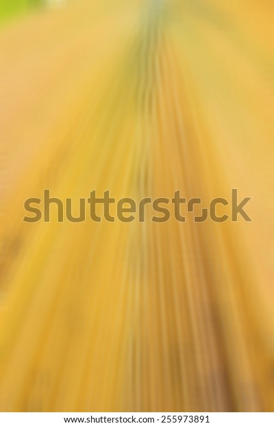 blured yellow sugar palm leaves