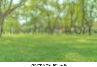 Blurred abstact green tree nature environment in park background