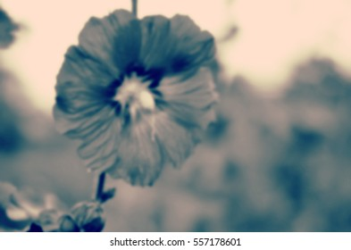 Blurred abstract background and can be illustration to article of pink flowers