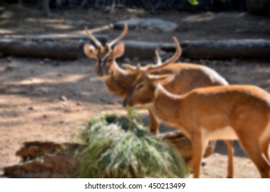 Blurred abstract background of Deer