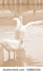 Blurred abstract background of goose