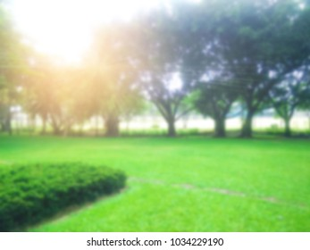 Blurred abstract  background of lawn grass green tree nature environment with sunlight rays ,green nature in the park for background