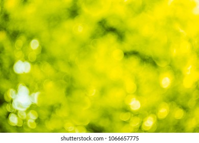 Blurred Abstract Bokeh Natural Green Background Of Summer Foliage. Woods Trees Leafs Greenery Boke Background.
