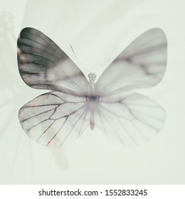 blurred abstract butterfly. double exposure.