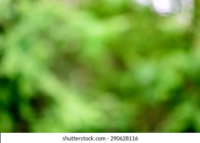 Blurred Abstract Nature Background - Out of Focus Lush Green Foliage Vegetation