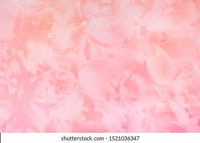 Blurred abstract pink flowers background