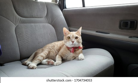 blurred adorable young bright orange tabby cat wearing fabric collar lying on passenger seat inside car when travel on holiday or vacation with owner.Leave pet in the car concept.A cat looking camera.