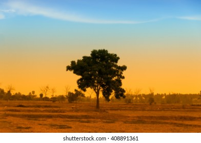 blurred alone tree with color effect