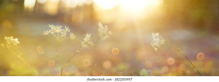 Blurred autumn background.Abstract natural background with bokeh and sun flares. A soft focus of nature with a yellow-orange accent.Delicate background in pastel colors with a soft yellow accent