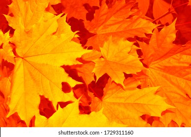 blurred. autumn landscape with bright colorful leaves. Indian summer. foliage.