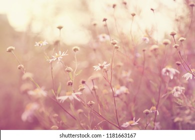 Blurred autumn meadow flowers, vintage colors