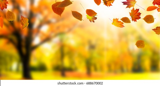 blurred autumnal landscape with leaf fall - autumn background