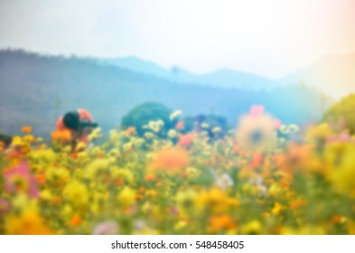 Blurred  background abstract and can be illustration to article of field yellow flower