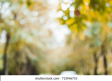 blurred background of autumn forest in day time