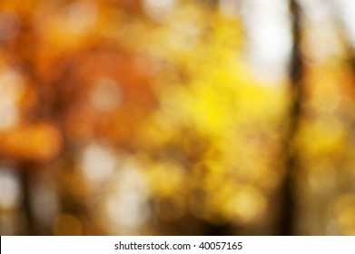 Blurred background of autumn forest with nice bokeh. Perfect as a background for studio portrait.
