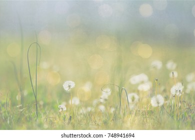 Blurred background backdrop of dandelions in a spring meadow with green, yellow, blue and white.