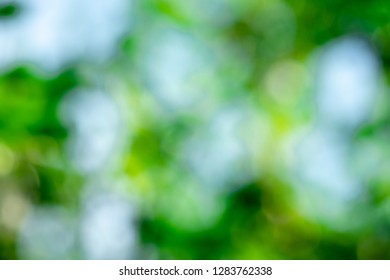 blurred background of bokeh backgroun of green leaves
