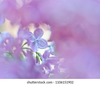 Blurred background branch of lilac outside the focal zone, focus on a single flower.