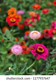 blurred background with colorful flowers on garden in spring