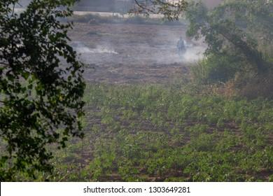 Cassava Waste Images, Stock Photos & Vectors | Shutterstock