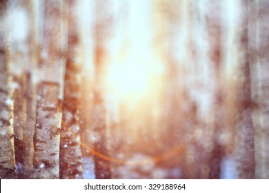 blurred background early winter