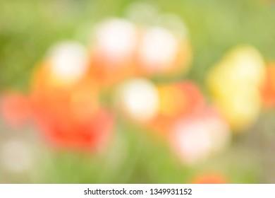 blurred background, flower meadow