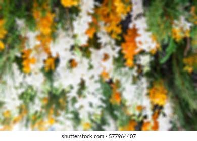 Blurred background of flower in flower tunnel