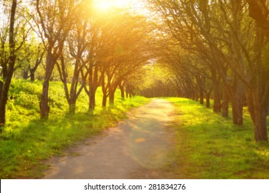 Blurred background image for the screen with text. Concept for text, design, advertising about spring, summer, sunset, sun, nature, park, road, shadow, trips, walking, health, lifestyle, green grass.