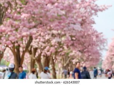 Blurred background of pink flower in garden