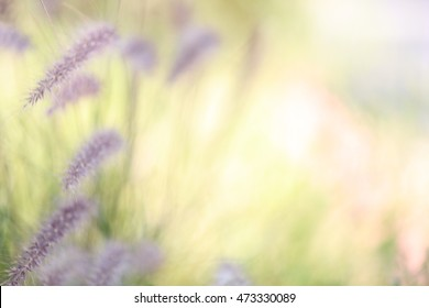 A blurred background of plants in nature.