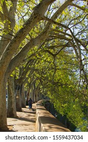 Blurred background, view of the Tiber river embankment from the side of the old city, a man with a baby in a stroller walk in the shadow of plane trees in Rome, Italy