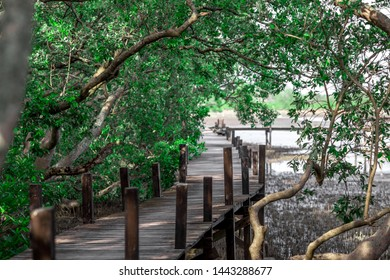 Blurred background of wooden bridges that allow tourists to walk through scenic views (mangroves, small forests) to study nature or relax on the way.