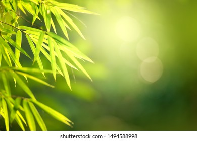 Blurred bamboo leaves on natural green bokeh background against sunrise for copy space. Sunlight green leaf background