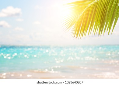 Blurred blue sky with bokeh light and coconut palm tree