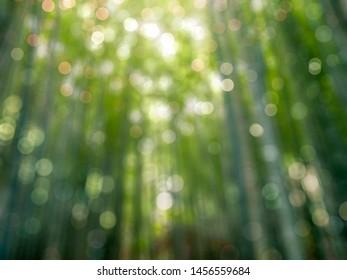 Blurred bokeh background of bamboo grove