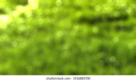 Blurred bokeh background image of bright green foliage in springtime.