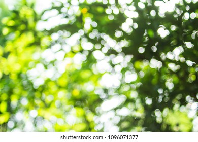 Blurred and bokeh green background