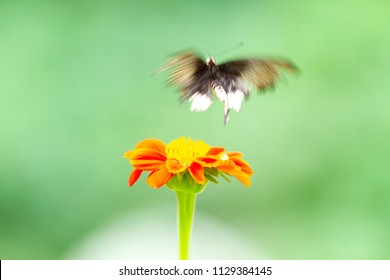 Blurred butterfly over red flower
