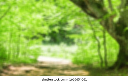 Blurred city park with green trees background