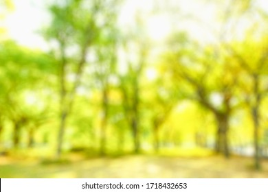 BLURRED CITY PARK WITH GREEN TREES AND VIBRANT LEAVES IN SUN LIGHT
