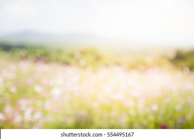 Blurred cosmos field with sky background